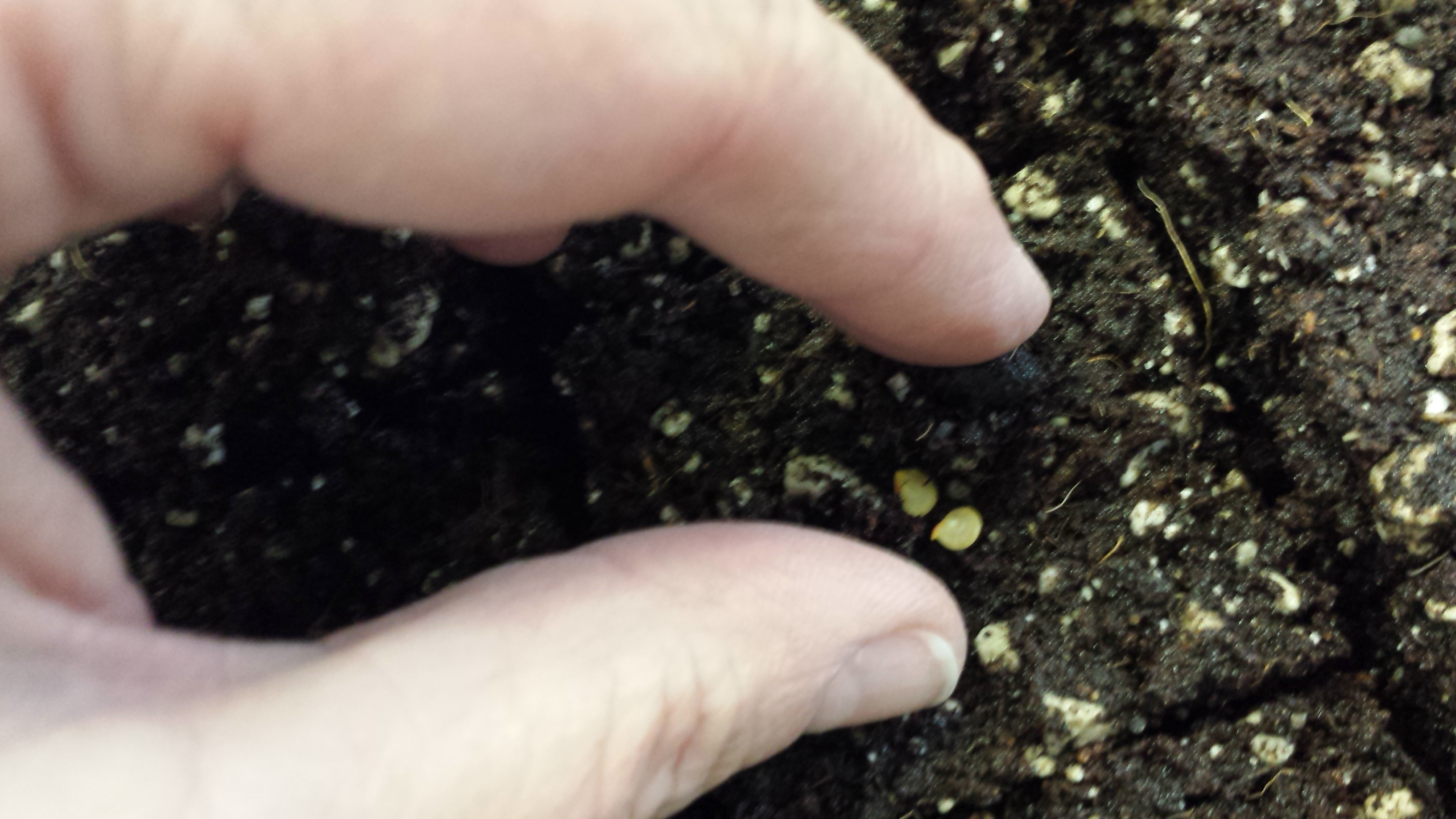 Pinch a little soil over the seeds.