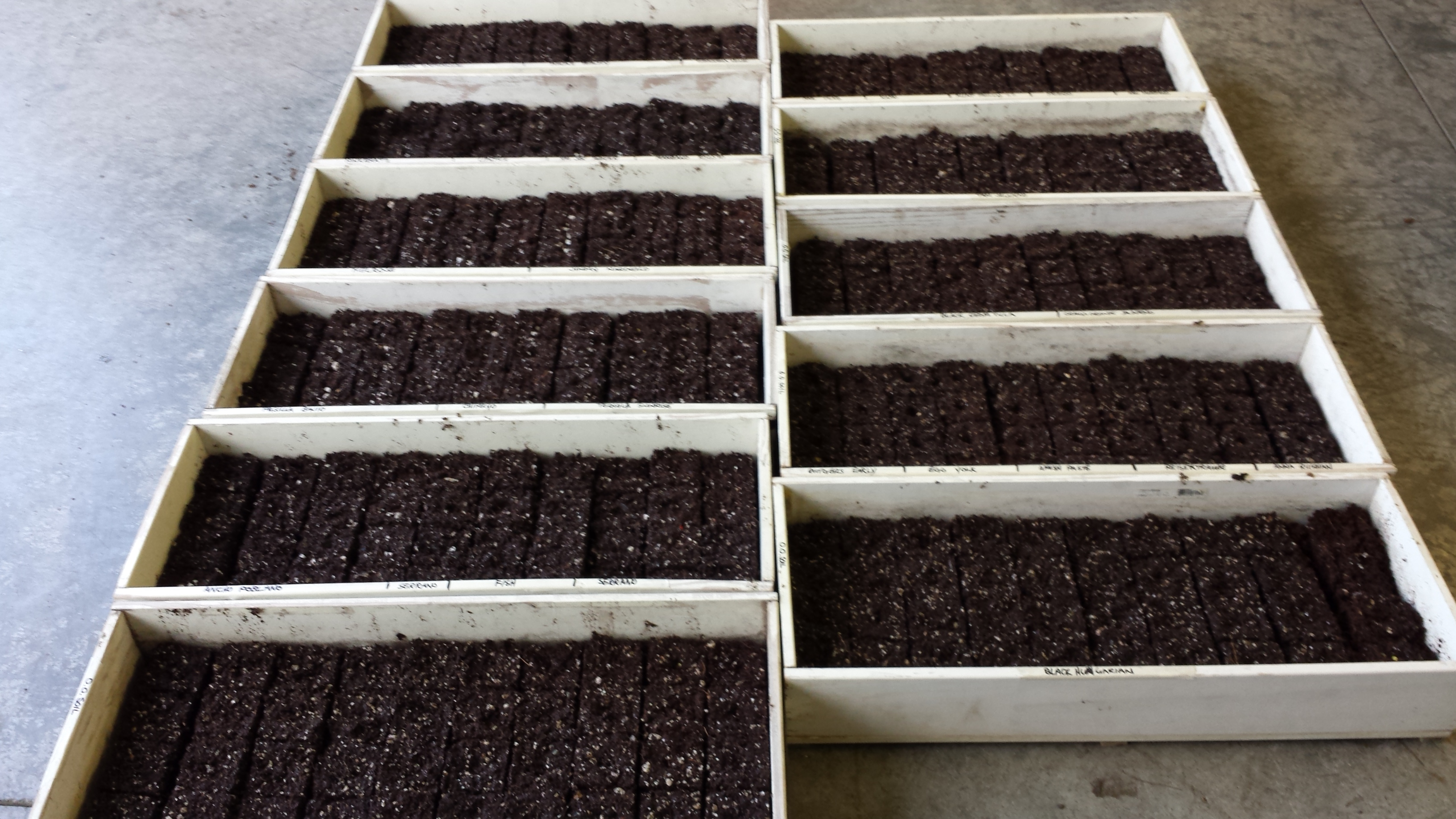 Seeded trays full of peppers, tomatoes, and eggplants.